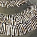 Denmark, Romo, Seashells, Razor Clams by Keenpress