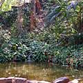 Dense Forest by Nilu Mishra