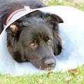 Depressed Dog by Esko Lindell
