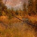Deschutes River Abstract by Carol Groenen