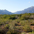 Desert And Mountains In Mexico Cabo Pulmo by Charlene Cox