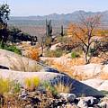 Desert Autumn by Greg Taylor