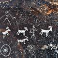 Desert Bighorn Sheep Petroglyphs Lake Mead by Kyle Hanson