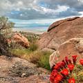 Desert Bloom by Spencer Baugh