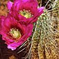 Desert Bloom by Steve Ondrus