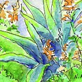 Desert Blooms by Nancy Matus