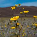 Desert Blooms by Stephen Whalen