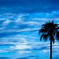 Desert Blues by Nick Mattea