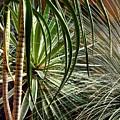 Desert Botanical by Mindy Newman