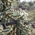 Desert Cactus 4 by Patricia Bigelow