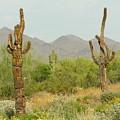 Desert Cactus by Diane Greco-Lesser