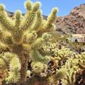 Desert Cactus Teddy Bear Cholla Eldorado Canyon Nevada by Edward Fielding