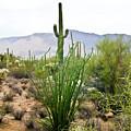Desert Chaparral by Douglas Barnett