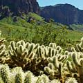 Desert Cholla 1 by Jill Reger