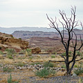 Desert Colors by Margaret Pitcher