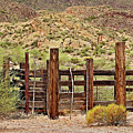 Desert Corral by Phyllis Denton