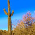 Desert Duo In Bloom by Judy Kennedy