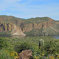 Desert Flora Over Canyon Lake by Lynda Lehmann