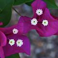 Desert Flower 2 by Guy Shultz