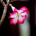 Desert Flower by Robert Meanor