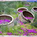 Desert Flowers by Joan Carroll