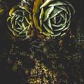Desert Flowers by Jorgo Photography - Wall Art Gallery