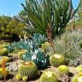 Desert Garden by Denise Mazzocco