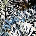 Desert Garden by Judy Wolinsky