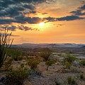 Big Bend Desert Glow At Sunset by Harriet Feagin