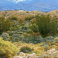 Desert Gold by Linda Phelps