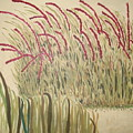 Desert Grasses by Wendy Peat