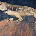 Desert Iguana Mural by Bob Christopher
