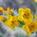 Desert In Bloom by Melinda Marsh