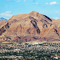 Desert Life by Susan Molnar