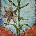 Desert Lily by Dodd Holsapple