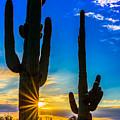 Desert Morning Sunrise by Daniel Dean
