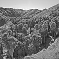Desert Oasis Iv by Frank DiMarco