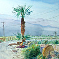 Desert Palm by John Norman Stewart