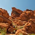 Desert Paradise by Frank Wilson