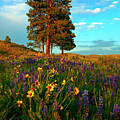 Desert Pines Meadow by Mike  Dawson