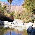 Desert Pond by Lisa Dunn