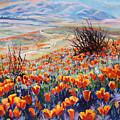 Desert Poppies by Margaret  Plumb