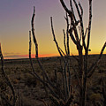 Desert Sky by Keith Peacock