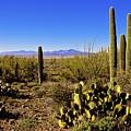 Desert Spring by Chad Dutson