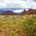 Desert Sunflowers by Paul Moore