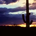 Desert Sunset by Diane Shirley