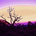 Desert Sunset With Silhouetted Tree 2 by Steve Ohlsen