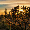 Desert Sunshine Shining Through  by Saija Lehtonen