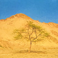 Desert Tree by Roy Pedersen