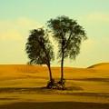 Desert Trees by Barbara Von Pagel